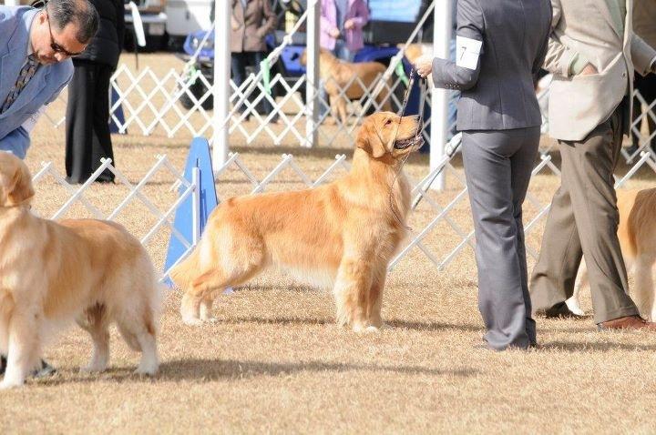 Joe at Brooksville Dog Show 2012