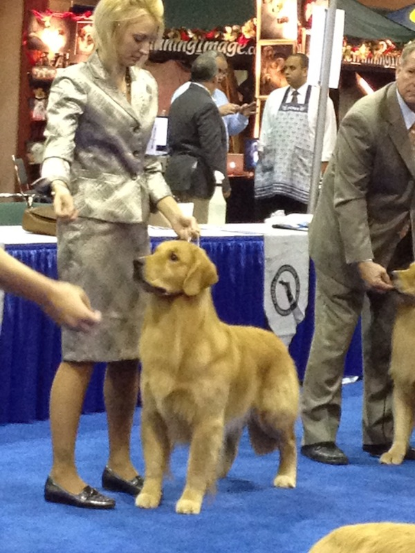 Joe at Eukanuba Dog Show