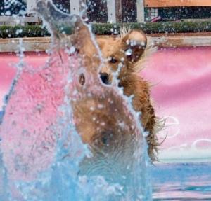 Glitz in water
